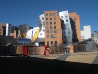 Gehry back